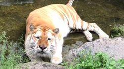 【悲しみ…】水を抜いた池に入ったトラさんが、切ない表情を見せる