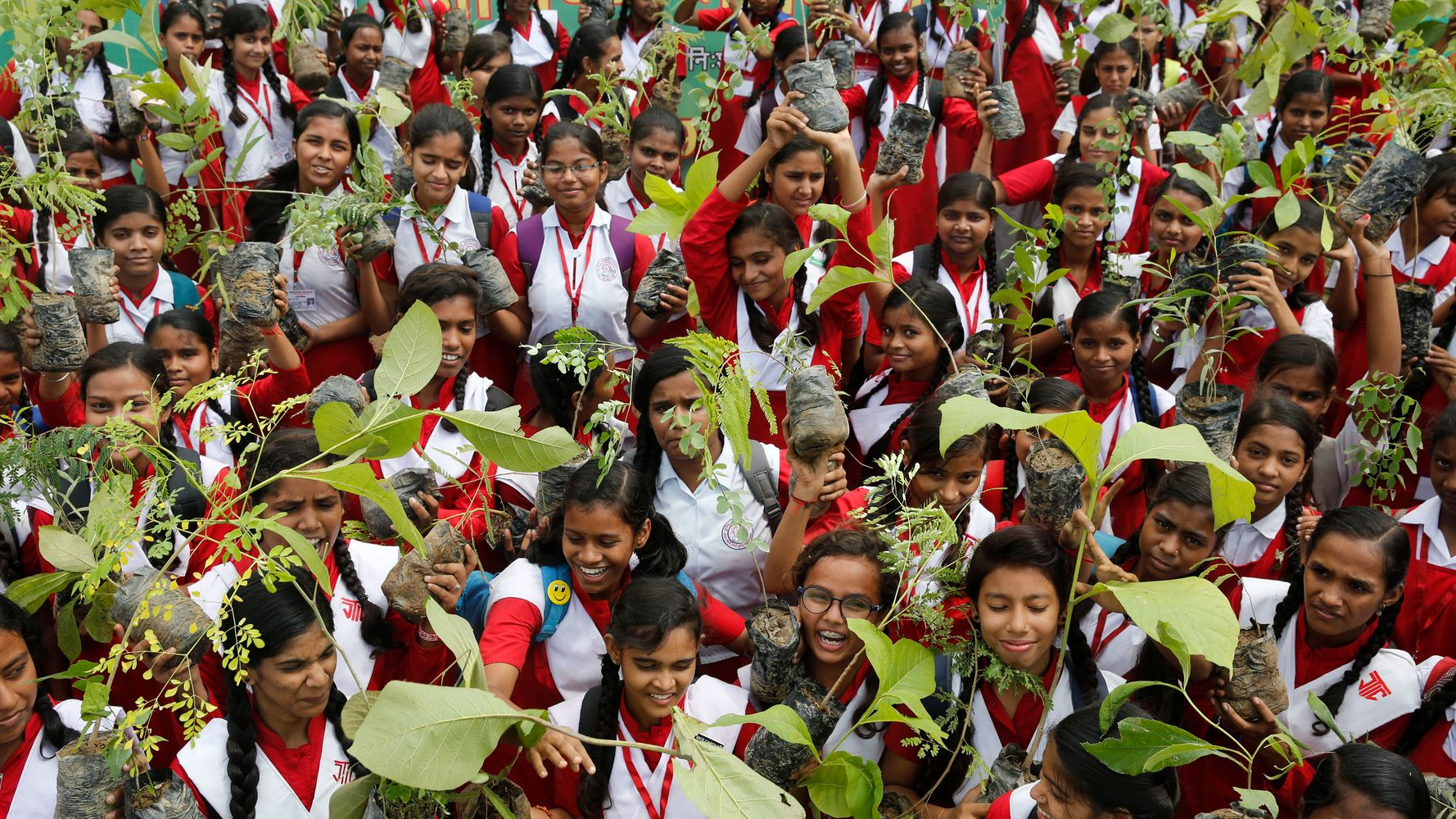 Westlake Legal Group 5d501fdc240000a945937eaa Indians Plant 220 Million Trees In A Single Day