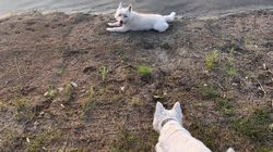 Giocano nello stagno, ma muoiono in poche ore. Tre cagnolini uccisi da un'alga