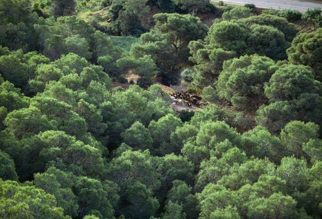 Feux de forêts: une