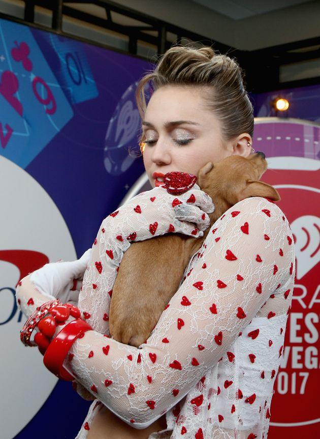 Qué van a hacer Miley Cyrus y Liam Hemsworth con los 16 animales que
