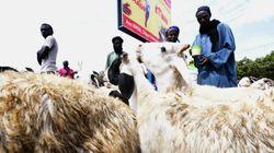 Au Sénégal, l'Aïd se fête entre musulmans et