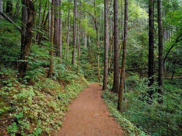 Το δάσος Στενής στην Εύβοια και τα άλλα 18 του δικτύου Natura μέσα από