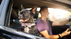 Everything You Need To Know About Traveling With Your Pet These