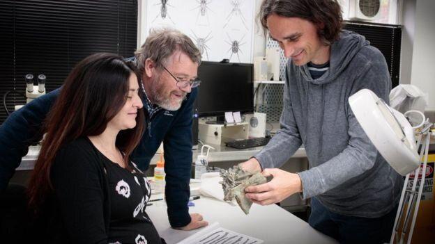 Προϊστορικός πιγκουΐνος μεγέθους ανθρώπου ανακαλύφθηκε στη Νέα