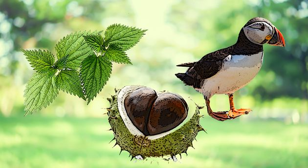 Some Kids Cant Recognise Conkers, Stinging Nettles Or Puffins – Theyre Missing Out