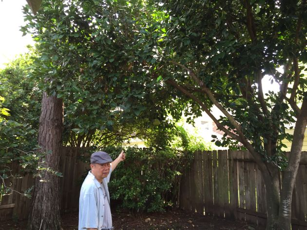 Fu Shing in his home garden in a Houston suburb. Here, he is pointing to a pomelo tree that he chose...