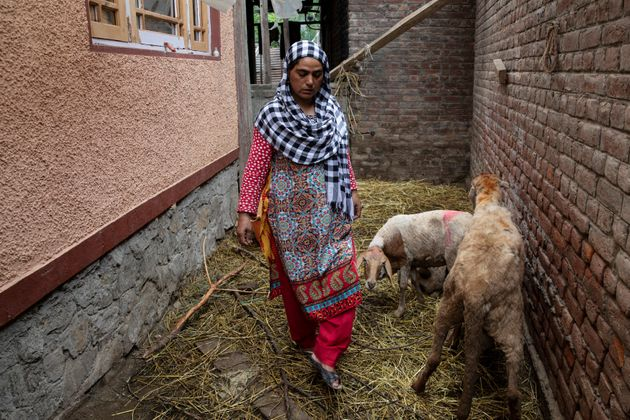 Fareeda, wife of Shameem Ahmad Ganai, tends to her husband's sheep in their house, in Pulwama, August...