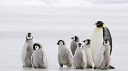 Descubren en Nueva Zelanda el fósil de un pingüino del tamaño de un