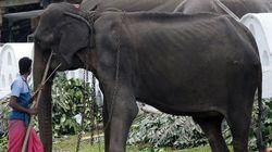 Les photos de cet éléphant squelettique dans un spectacle déclenchent un