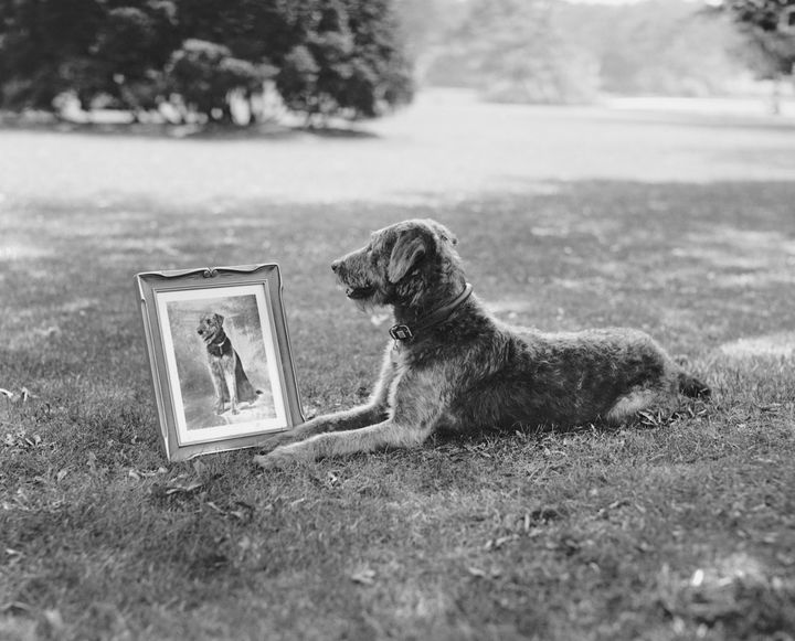 Laddie Boy poses with his portrait.
