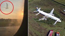 Il momento in cui i gabbiani colpiscono il motore dell'aereo atterrato nel campo di grano