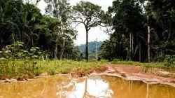 Desmatamento avança 15% na Amazônia nos últimos 12 meses, diz