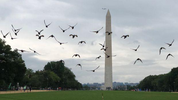 WASHINGTON, July 8, 2019 -- Pigeons fly near the Washington Monument in Washington D.C., the United States, on July 8, 2019. (Photo by Liu Jie/Xinhua via Getty) (Xinhua/Liu Jie via Getty Images)