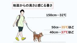 ペットや子どもの熱中症に注意。60℃を超える地面でやけども、外出の注意点と対処法