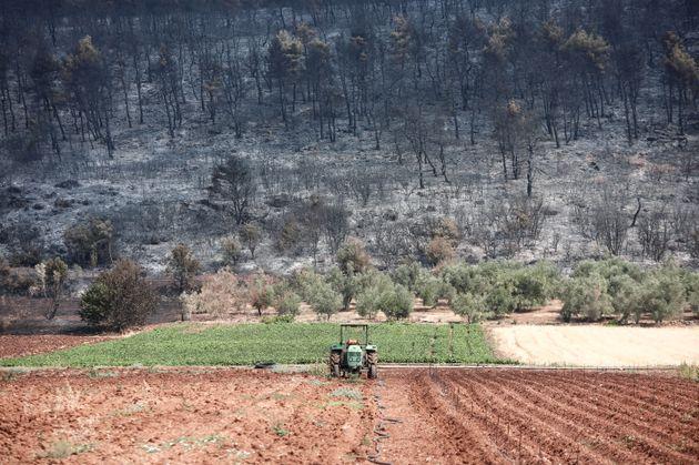 Χαρτογραφία καταστροφής: Τι άφησε πίσω της η φωτιά στην