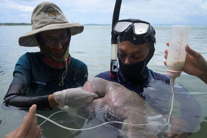En mai, les soins prodigués à Mariam avaient fait les gros titres de la presse et ému les réseaux sociaux, témoins directs des ravages de la pollution au plastique des océans.