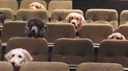 Οντάριο: Σκύλοι - βοηθοί εκπαιδεύονται βλέποντας