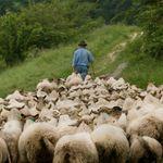 Pagava il pastore 1,80 euro l'ora, senza ferie o riposi. Arrestato