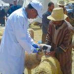 Aïd Al Adha: Le ministère de l'Agriculture satisfait de l'opération