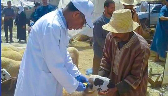 Aïd Al-Adha: Le ministère de l'Agriculture satisfait de l'opération