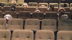 介助犬がミュージカル鑑賞する姿が「マナー良すぎる」と話題に