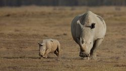 Des députés européens veulent interdire la chasse aux trophées d'espèces