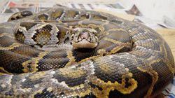 Βρετανία: Αφησαν κουτί γεμάτο ζωντανά φίδια έξω από