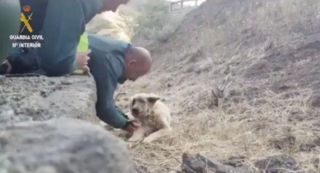 Los dos agentes del Seprona, atendiendo al perro en Gran