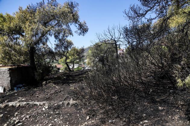 Υπό έλεγχο η πυρκαγιά στην Κακή Βίγλα