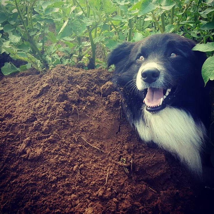 Leur chien Zéphyr mange tous les rongeurs, et notamment les marmottes.