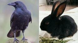 ¿Conejo o cuervo? La ilusión óptica que divide a