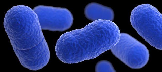 Listeriosis, el brote infeccioso que tiene en alerta sanitaria a toda