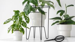 We Found Plenty Of Plant Stands Under $50 For The Proud Plant