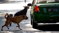 과학자들이 생태계 파괴하는 가장 위협적인 동물 중 하나로 개를 꼽는