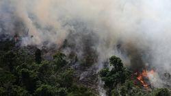 Quais os impactos dos incêndios na Amazônia no restante do