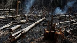 Campanha em defesa da Amazônia atinge recorde de 4 milhões de