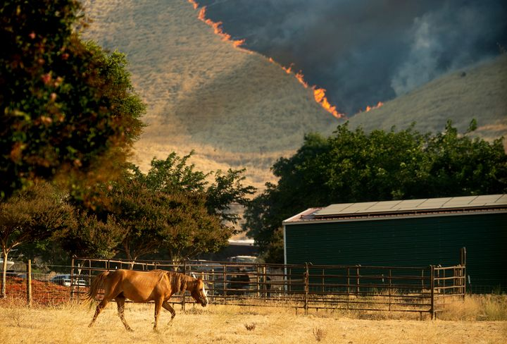 In early August, the Marsh Fire burned hills in the the town of Brentwood in California's Contra Costa County.
