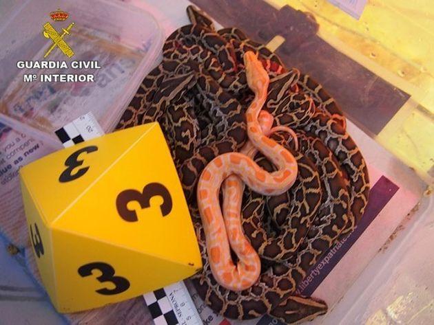 Espagne: Un réseau de trafic d'animaux exotiques à destination du Maroc démantelé