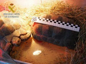 Espagne: Un réseau de trafic d'animaux exotiques à destination du Maroc