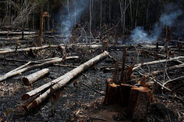 Alors que nous sommes dans une année normale pour l'Amazonie, 72.843 feux y ont été