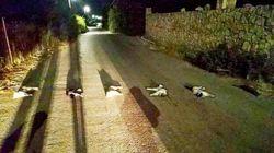 Βασάνισαν, σκότωσαν και άπλωσαν γάτες σε δρόμο των