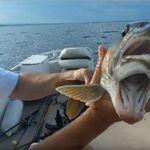 «Δίστομο» ψάρι - τέρας βρέθηκε σε λίμνη στην