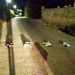 Χανιά: Τον παρανοϊκό που σκότωσε και βασάνισε γάτες αναζητά η