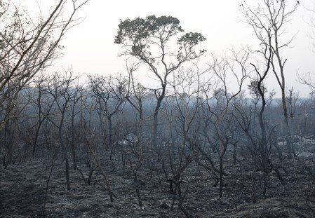 Η Λατινική Αμερική φλέγεται: Μεγάλες δασικές πυρκαγιές σε Βολιβία και