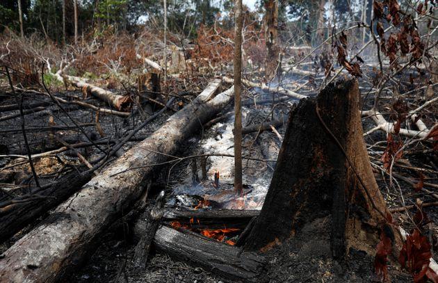 As fotos de animais carbonizados e incêndios na Amazônia são