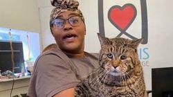 Unbelievably Large Shelter Cat 'Big Boi Mr. B' Has The Internet