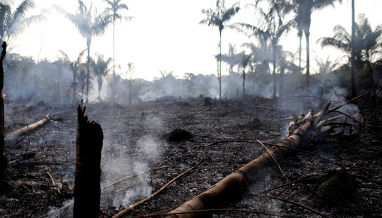 Amazon Rainforest Fires: Why Brazil's President Is Beefing With Macron Over The