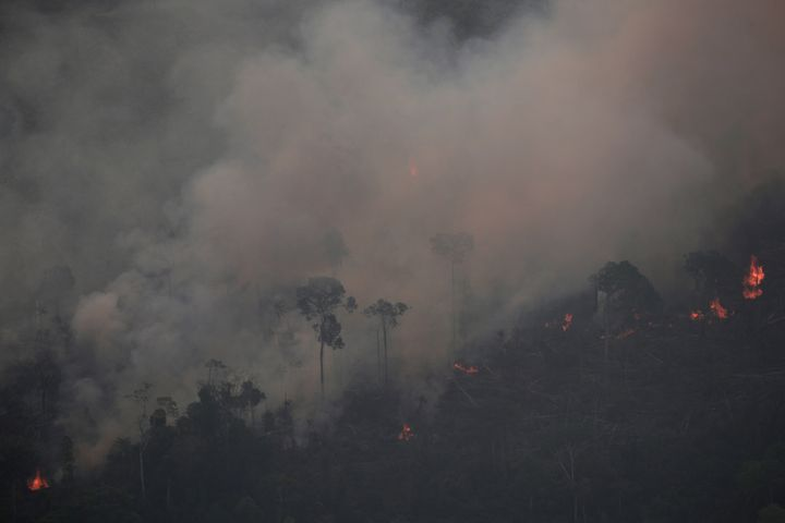 The Amazon Rainforest Is On Fire – Here Are 6 Ways You Can Help | HuffPost Life
