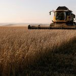 Le gouvernement espère ne pas importer de blé cette